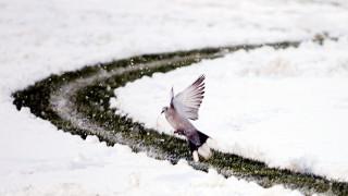 Έκτακτο δελτίο ΕΜΥ: Κατακόρυφη πτώση της θερμοκρασίας και χιόνια ακόμα και στην Αθήνα