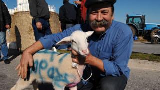 Έκτακτη στήριξη των κτηνοτρόφων του Αιγαίου από την ΕΕ