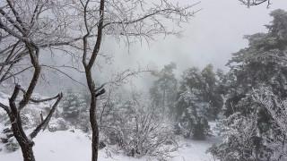 «Στα λευκά» η Πάρνηθα (pics)