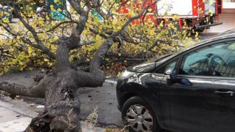 Δεκάδες κλήσεις στην Πυροσβεστική για κοπές δέντρων στην Αττική