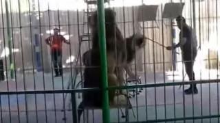 Λιοντάρι επιτίθεται και σκοτώνει εκπαιδευτή τσίρκου μπροστά σε παιδιά (vid)