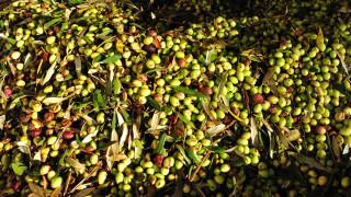 ΕΦΕΤ: Αυτά είναι τα επικίνδυνα ελαιόλαδα που κυκλοφορούν στην αγορά