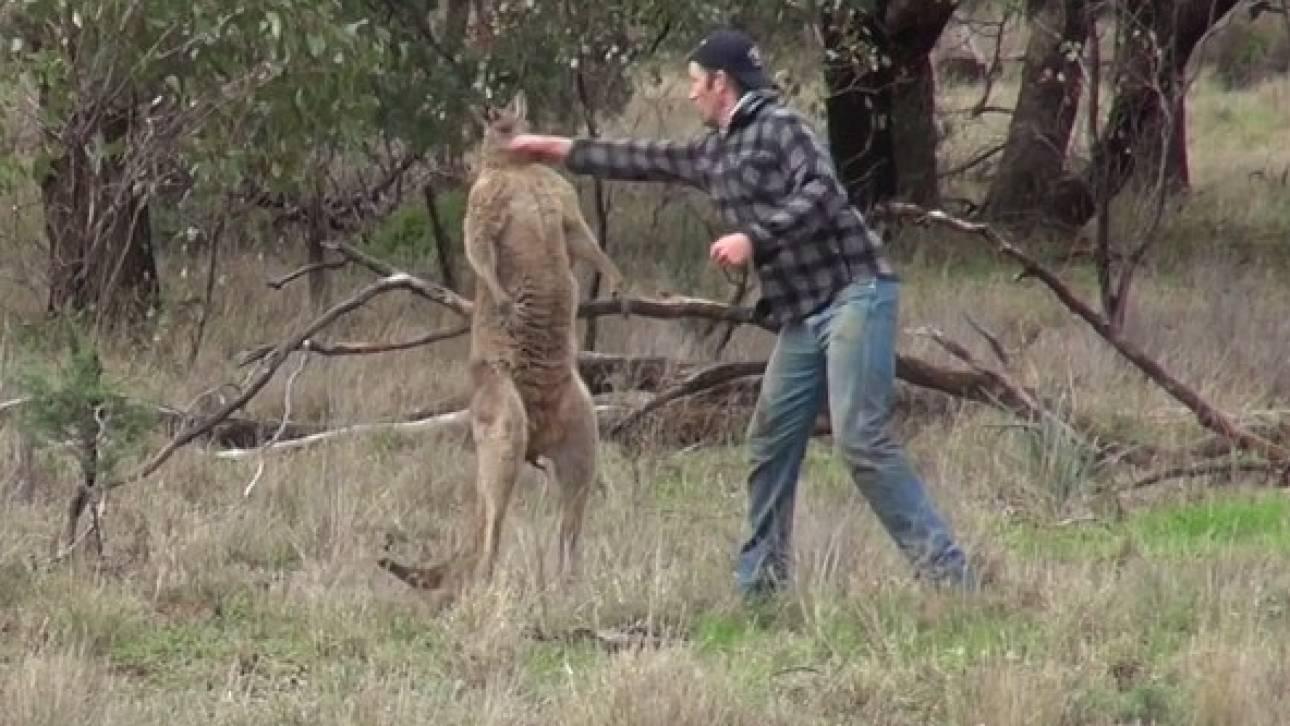 Άνδρας δίνει μπουνιά σε καγκουρό για να σώσει τον σκύλο του (vid)
