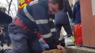 Πυροσβέστης έσωσε τη ζωή σκύλου με «φιλί της ζωής» (vid)