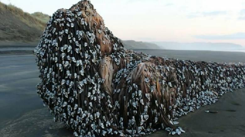 Mυστηριώδες αντικείμενο σε παραλία της Ν. Ζηλανδίας προκαλεί αναστάτωση (vid)