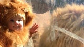 Μωρό με στολή λιονταριού γίνεται viral όταν συναντά τον βασιλιά των ζώων (vid)