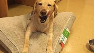 Σκύλος κάλεσε την πυροσβεστική πριν τελικά σώσει ο ίδιος την ιδιοκτήτριά του (pic)