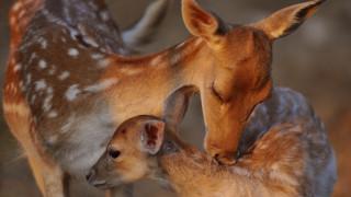 Ρόδος: Άγνωστοι σκότωσαν 14 ελάφια