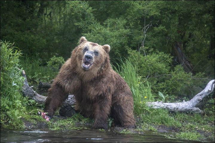 inside bear