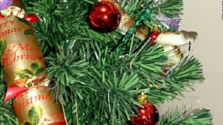 Τι κάνει ένα φίδι τυλιγμένο σε χριστουγεννιάτικο δέντρο