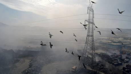Μόλυνση περιβάλλοντος: ο υδράργυρος στις σαρδέλες και η αιθαλομίχλη
