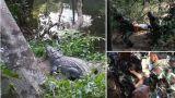 Κροκόδειλος δάγκωσε πόδι γυναίκας την ώρα που έβγαζε selfie