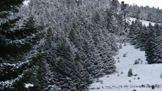 Κρήτη: Αποκλεισμένοι κτηνοτρόφοι στα χιόνια