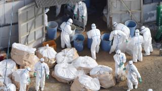 Θα σφαγιαστούν χιλιάδες πάπιες και χήνες στη Γαλλία