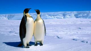 Γερμανία: «Περπατάτε σαν πιγκουίνοι για να μην γλιστρήσετε»