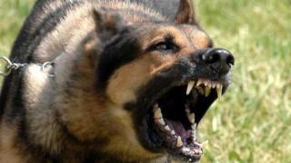 Άγρια επίθεση σκύλου σε ηλικιωμένη