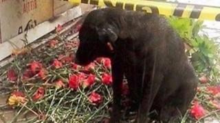Έκρηξη στη Σμύρνη: Ένας αδέσποτος σκύλος θρηνεί τον αστυνομικό φίλο του