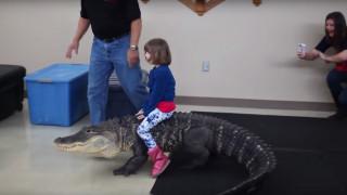 Κοριτσάκι ιππεύει αλιγάτορα σε πάρτι γενεθλίων (Vid)