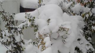 Κατέρρευσε η οροφή του κλειστού γυμναστηρίου Κύμης λόγω... χιονιά (pic)