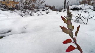 Σημαντικές ζημιές σε αγροτικές καλλιέργειες στο Ηράκλειο