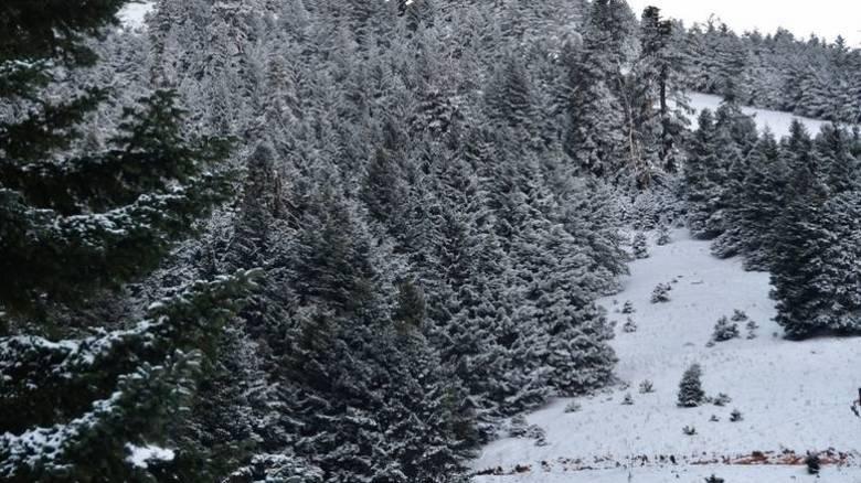 Απαγορεύτηκε το κυνήγι λόγω του σφοδρού χιονιά