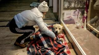 Εμπορικό κέντρο φιλοξενεί αδέσποτα για να τα προστατεύσει από το κρύο (pics)
