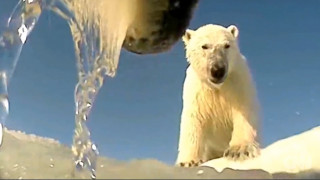 Ο κόσμος μέσα από τα μάτια μίας πολικής αρκούδας