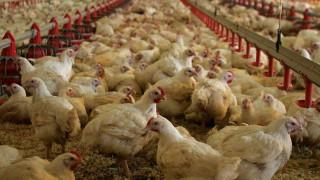 Βουλγαρία: Επιθετική εξάπλωση της γρίπης των πτηνών