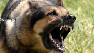 Σκύλος κατασπάραξε 30χρονο στον Βόλο