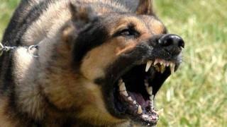 Βόλος: Μυστήριο με την επίθεση σκύλου σε 30χρονο