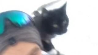 Γάτος έχει μαγέψει το διαδίκτυο για τις ικανότητές του στο... έλκηθρο (vid)