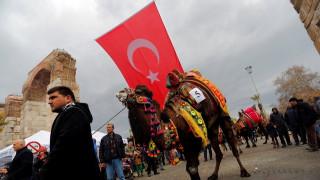 Τουρκία: Οι ετήσιοι αγώνες πάλης με πρωταγωνιστές... καμήλες