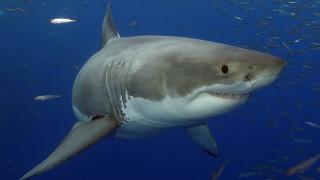 Οι καρχαρίες «κρύβουν» το μυστικό της θεραπείας κατά του Πάρκινσον;