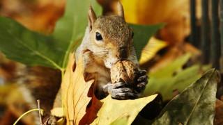 Οι σκίουροι σημαντική... απειλή για τις υποδομές παγκοσμίως