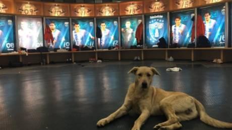 Ένας σκύλος και μια γάτα εισέβαλαν σε μεξικανικό γήπεδο