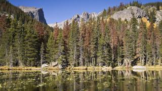 Νέο βιοκαύσιμο από… ξύλο μειώνει τις εκπομπές διοξειδίου του άνθρακα κατά 80%