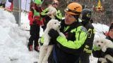 Χιονοστιβάδα Ιταλία: Τρία μικρά σκυλιά βρέθηκαν ζωντανά (pics)