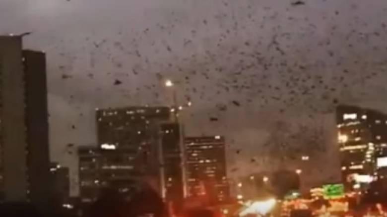 ΗΠΑ: Σμήνος πουλιών αναβιώνει σκηνές του... Χίτσκοκ (vid)
