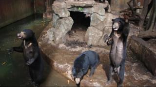 Οργή για τις υποσιτισμένες αρκούδες που εκλιπαρούν για φαγητό