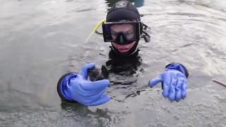 Βρέθηκε απολίθωμα προϊστορικού καρχαρία ηλικίας 34 εκατ. ετών (vid)