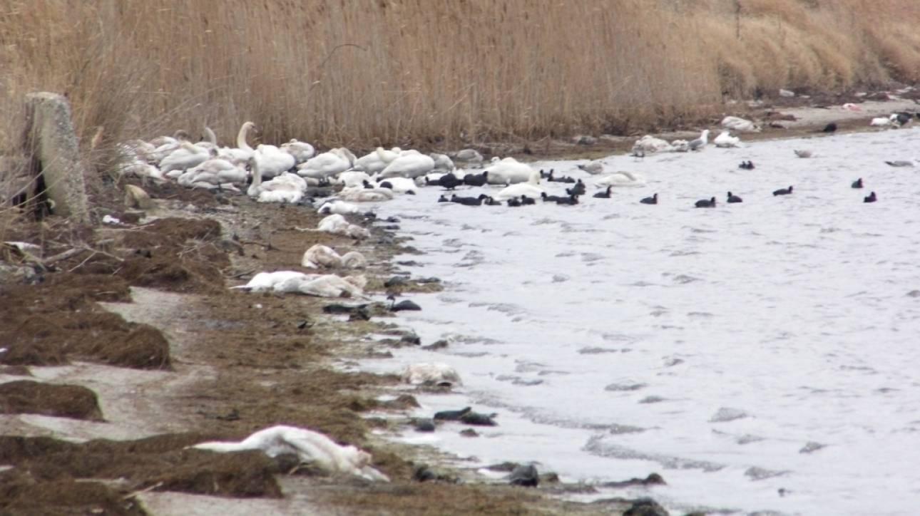 Ροδόπη: Εκατοντάδες νεκρά πουλιά εξαντλημένα από το ψύχος (pics)
