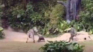 Κίνα: Τρομακτική επίθεση ζέβρας σε υπάλληλο ζωολογικού κήπου (vid)