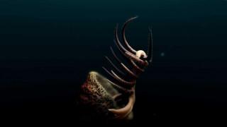 Ο σαγηνευτικός χορός ενός πλάσματος 500.000.000 ετών