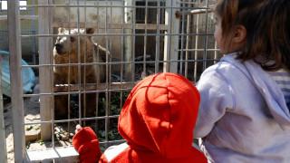 «Νεκροταφείο» ο ζωολογικός κήπος της Μοσούλης – Συγκλονιστικές φωτογραφίες