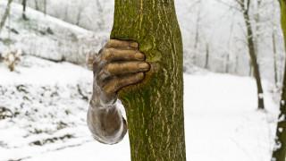 Χάλκινο χέρι «πιέζει» κορμό δέντρου για 39 χρόνια (Pics)