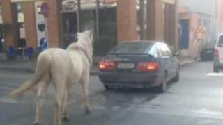 Θεσσαλονίκη: Ένα άλογο περιφέρεται στους δρόμους δεμένο πίσω από αυτοκίνητο (vid)