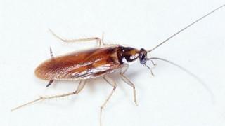 Πήγε στο νοσοκομείο με ημικρανία και της έβγαλαν ζωντανή κατσαρίδα από το κρανίο (vid)