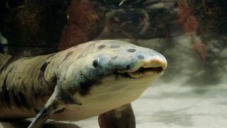 Θανατώθηκε ψάρι το οποίο θαύμασαν πάνω από 208 εκατομμύρια μάτια