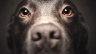 Ο σκύλος σας μπορεί να σας... μοιάσει