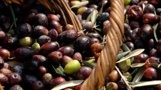 Εκτίναξη των τιμών του ελαιολάδου έφερε η μειωμένη σοδειά
